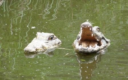 Fake Crocs in Queens Park Ipswich.