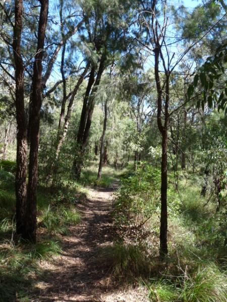 Bush Walk Track.