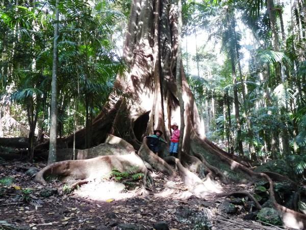 Jorick en ik voor een grote boom in het regenwoud.