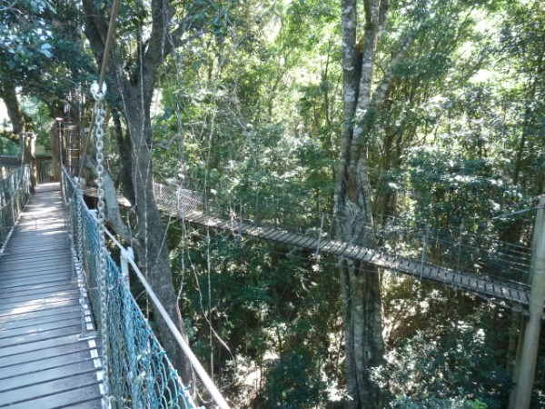 Tree Top Walk.