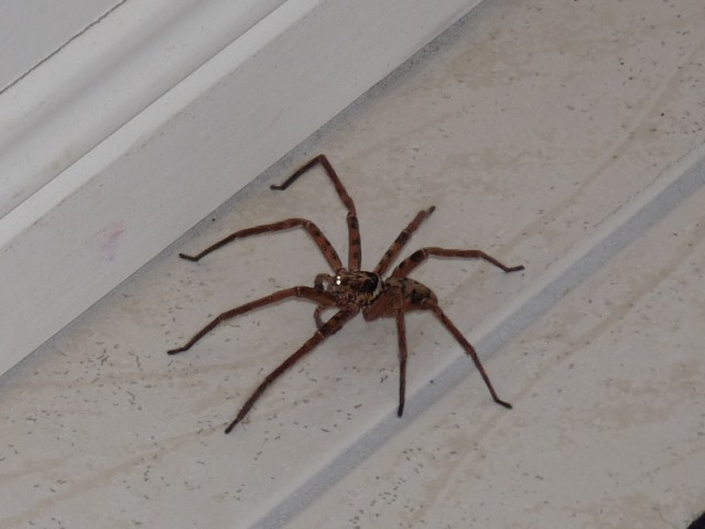 Spider in the corridor.