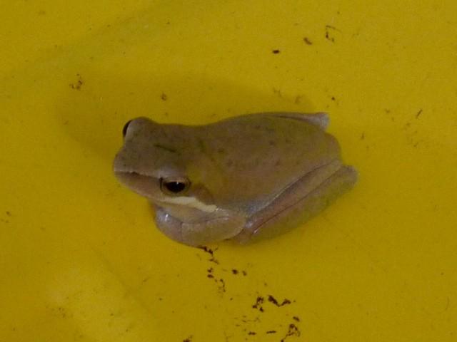Frog in Jorick's truck.