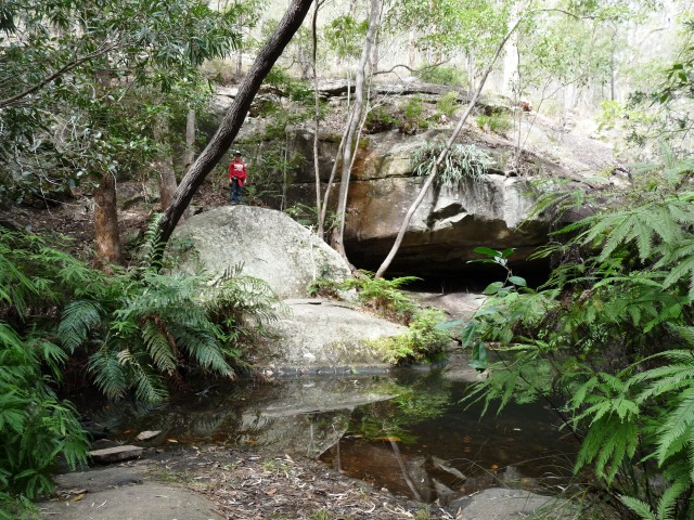 Cania Gorge, fern Tree Pool