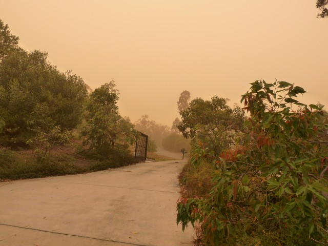 Road to our house during the dust storm.
